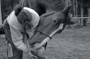 Metta Equus